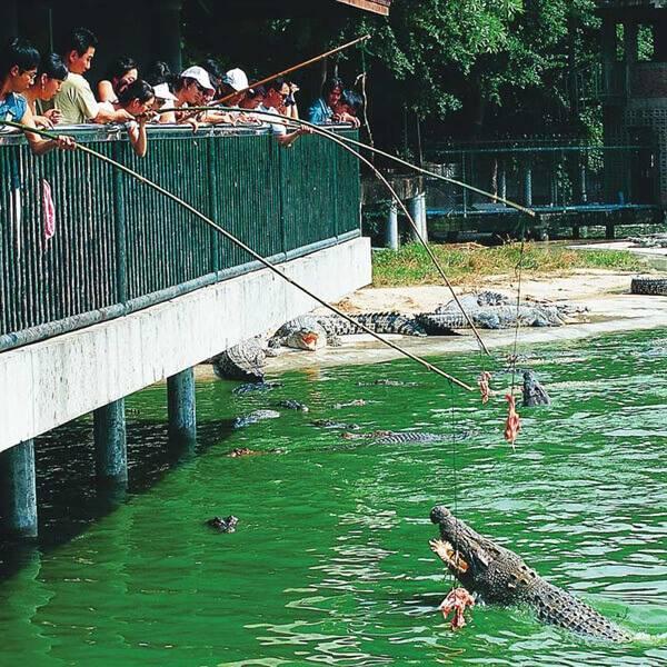 crocodile farm pattaya에 대한 이미지 검색결과